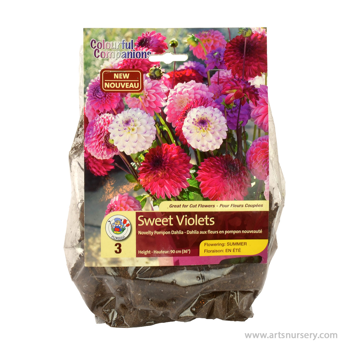 Dahlia Sweet Violets Tuber Colourful Companion Pack