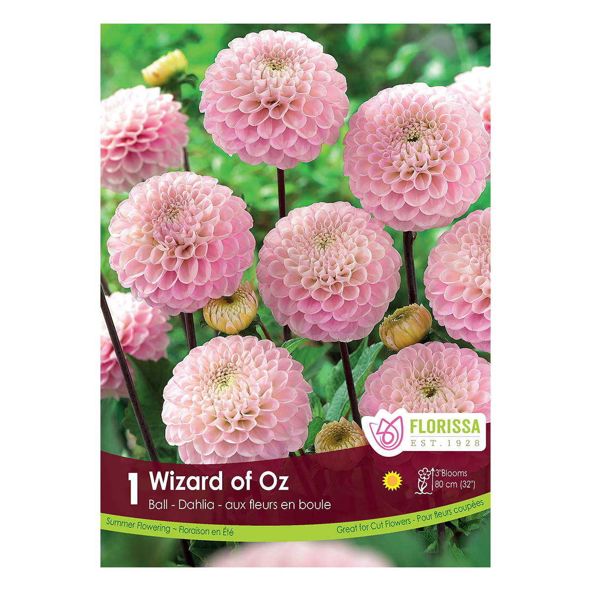 Dahlia Wizard Of Oz Tuber