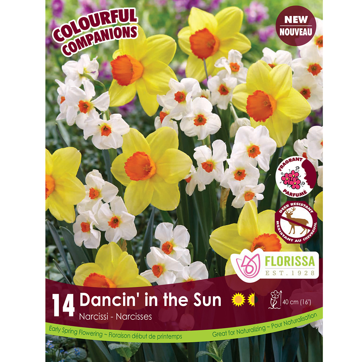 Colourful Companions 'Dancin' In the Sun' Bulbs