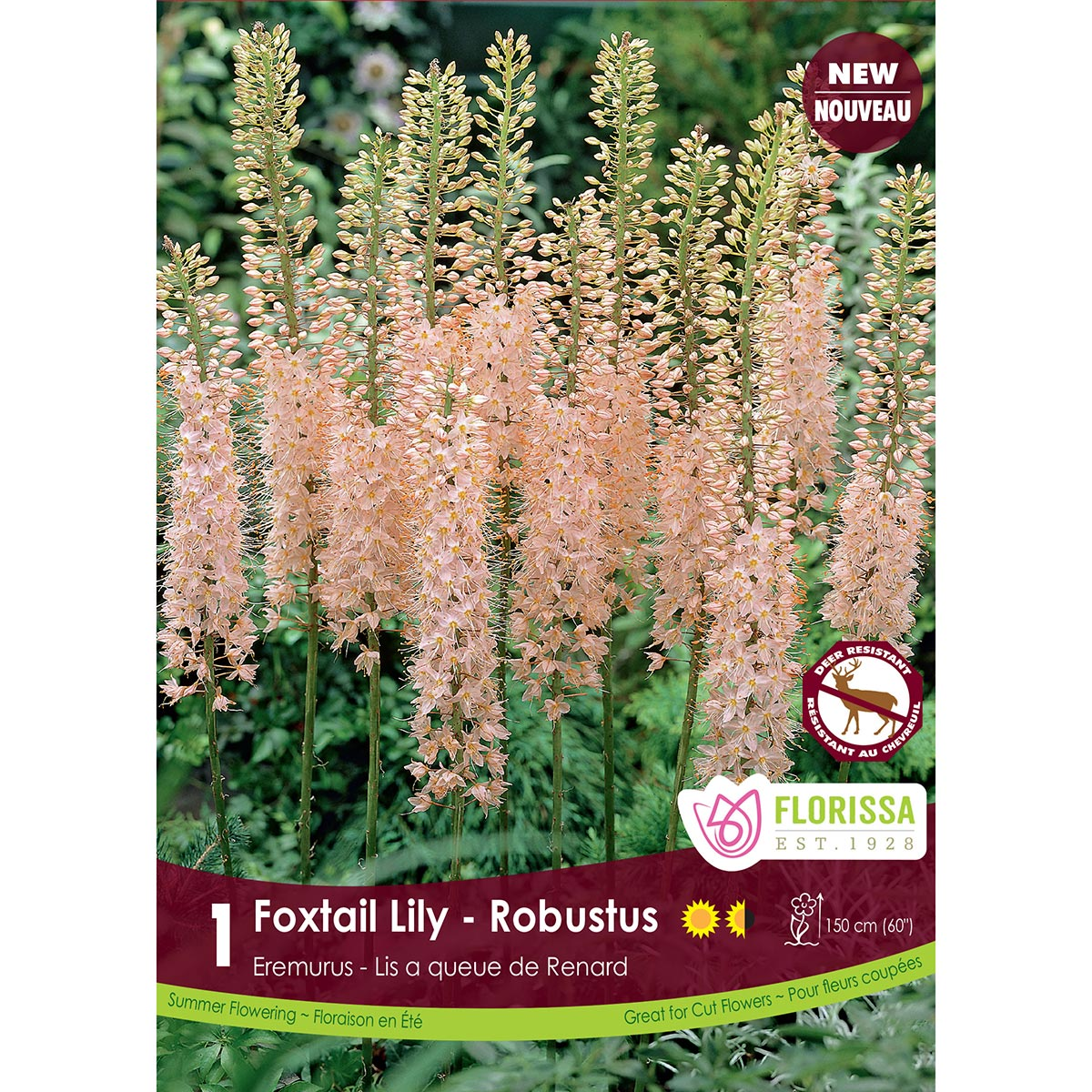 Eremurus 'Robustus' Bulbs