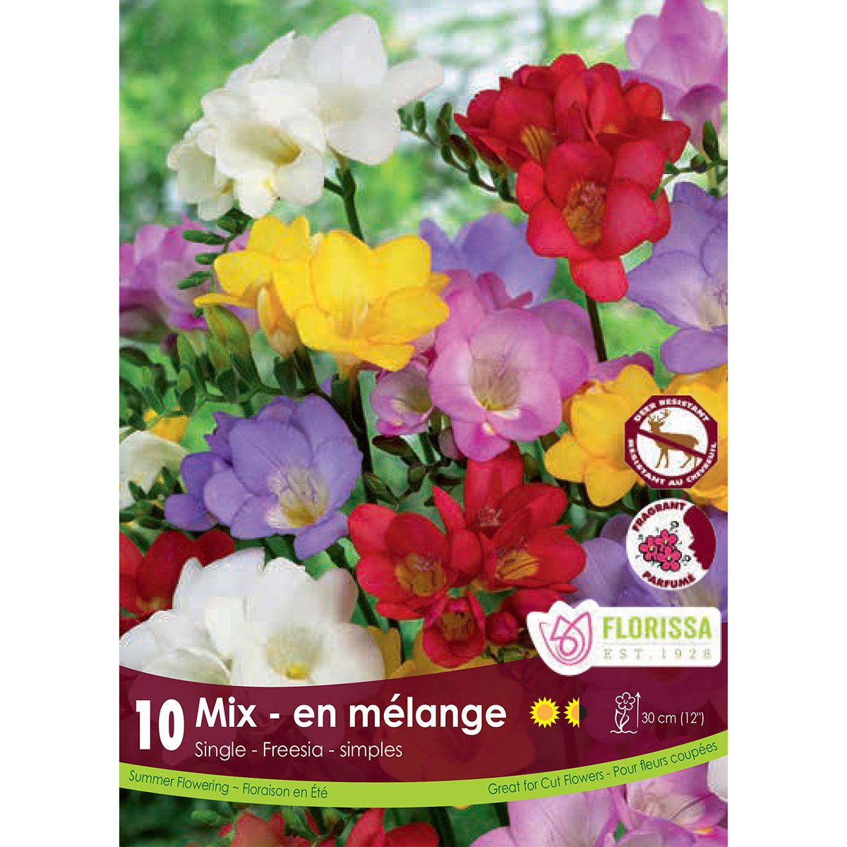 Freesia 'Single Mix' Bulbs