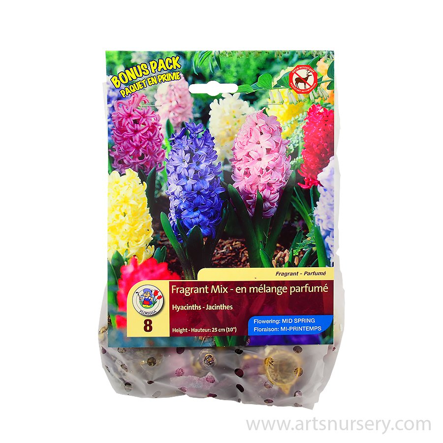 Fragrant Mix Hyacinth Bulbs Bonus Pack