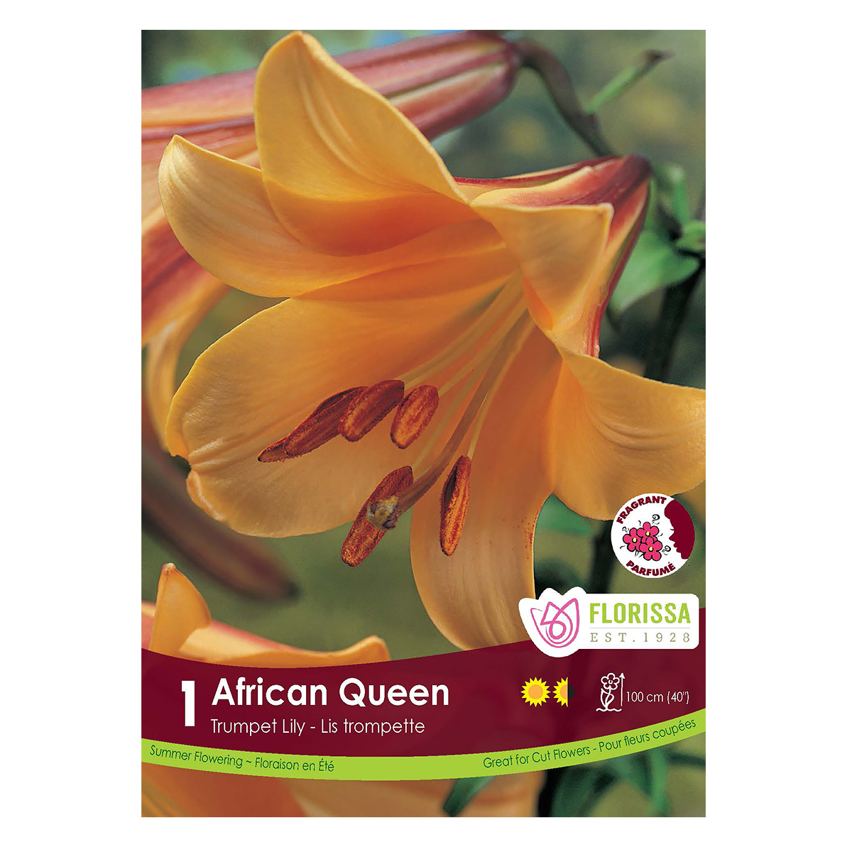 Lily Trumpet 'African Queen' Bulb