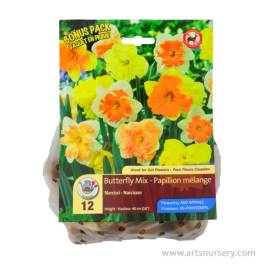 Butterfly Mix Narcissus Bulbs Bonus Pack