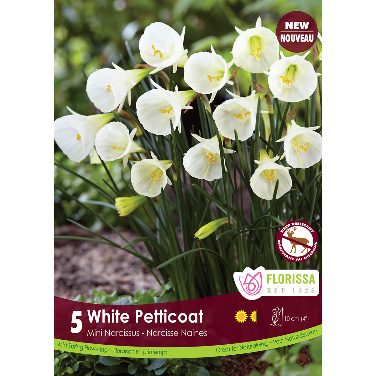 Narcissus 'White Petticoat' Bulbs