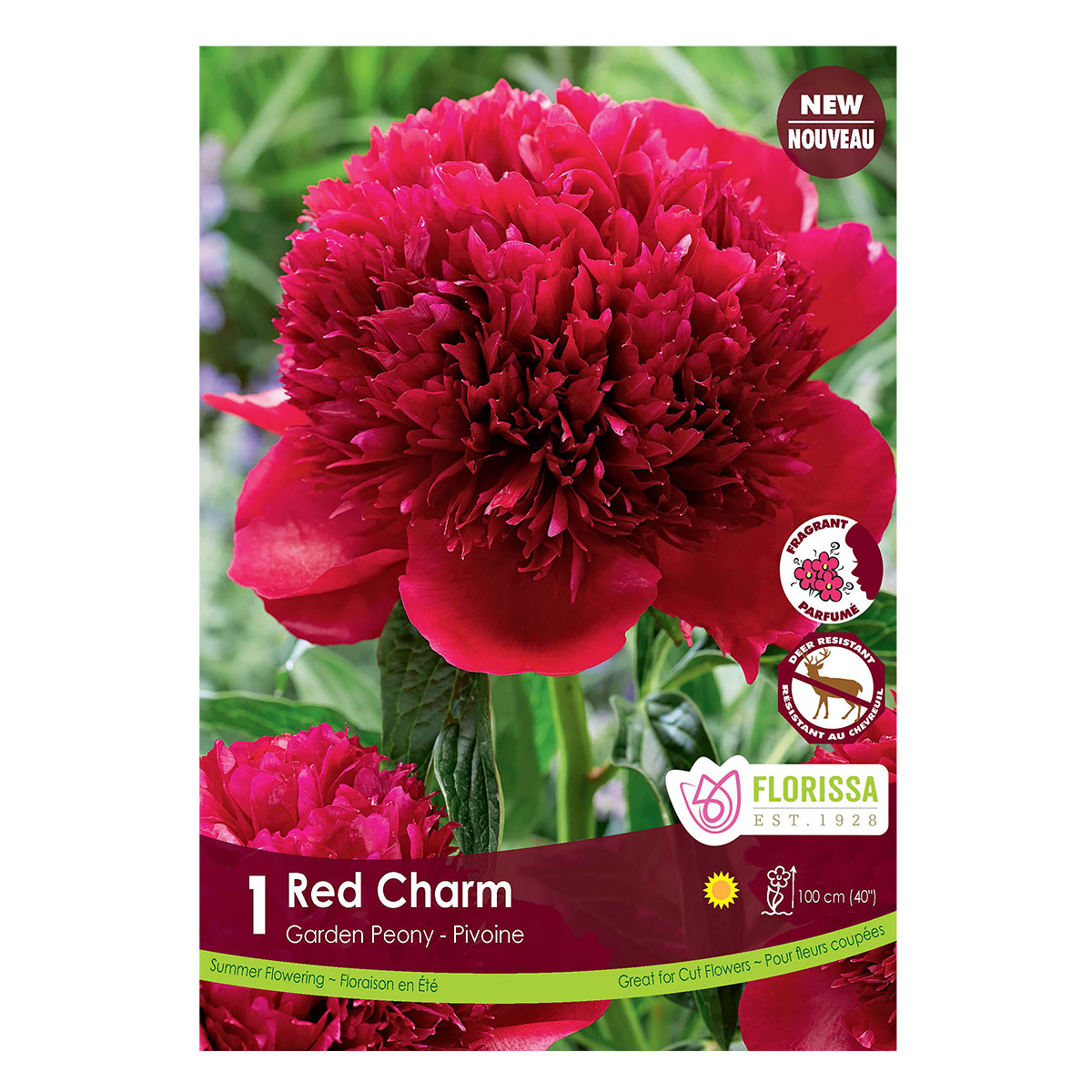 Paeonia 'Red Charm' Root