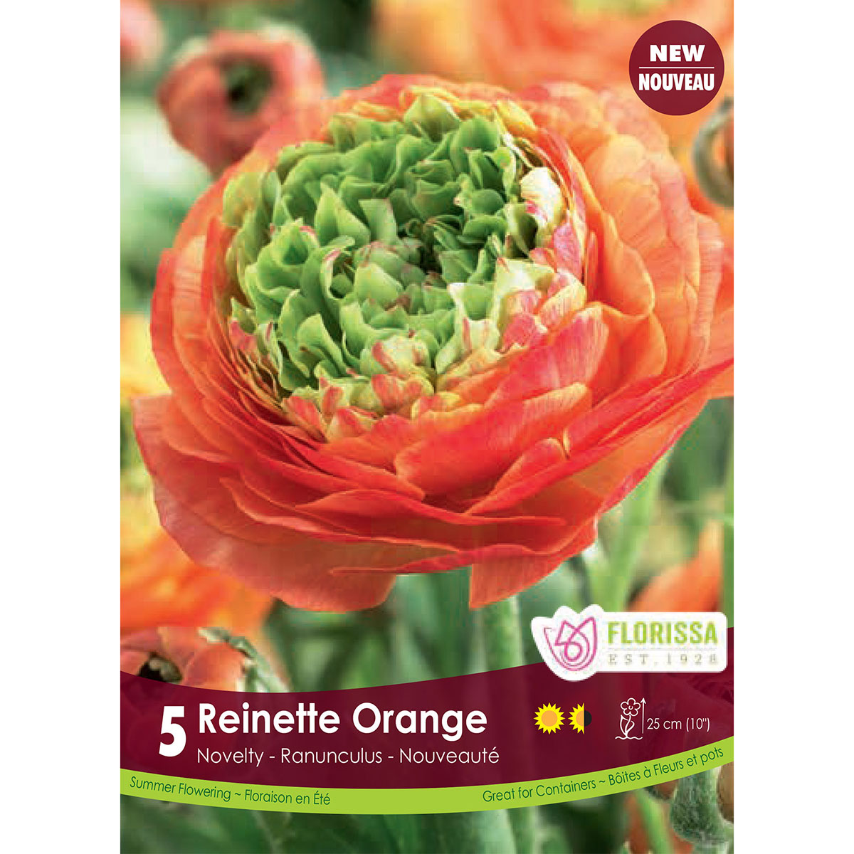 Ranuncules 'Reinette Orange' Bulbs