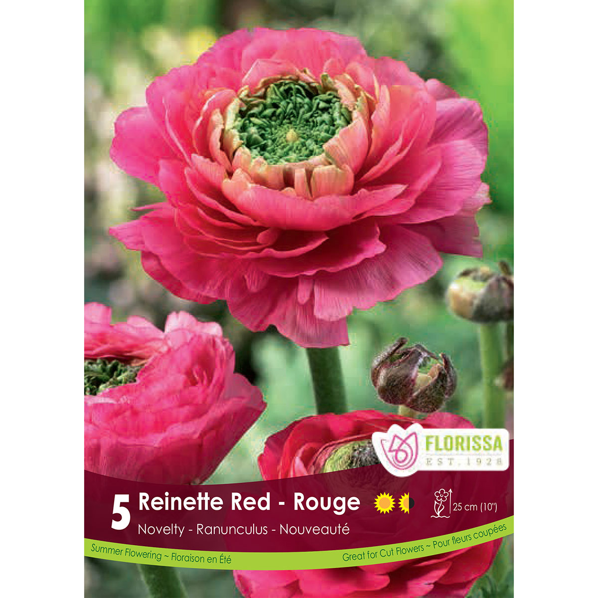 Ranuncules 'Reinette Red' Bulbs