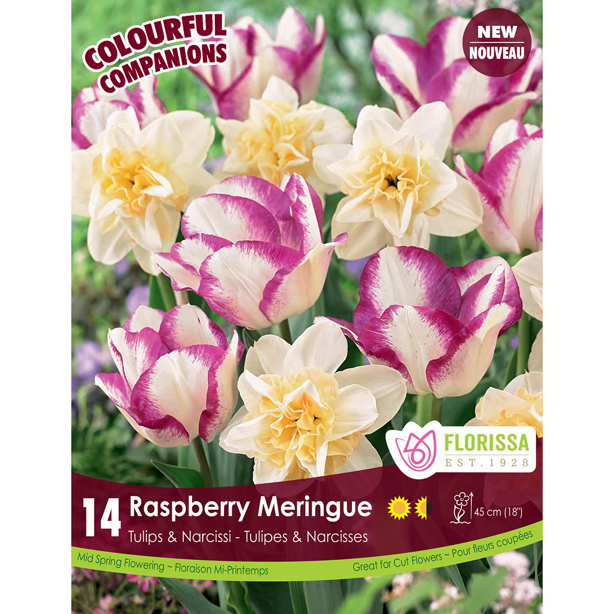 Colourful Companions 'Raspberry Meringue' Bulbs