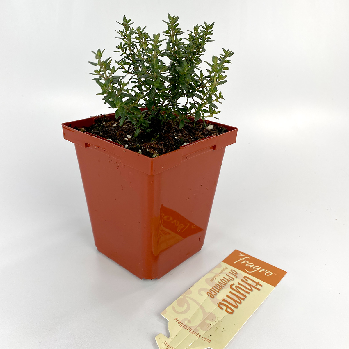Thyme_OfProvence_4in.jpg