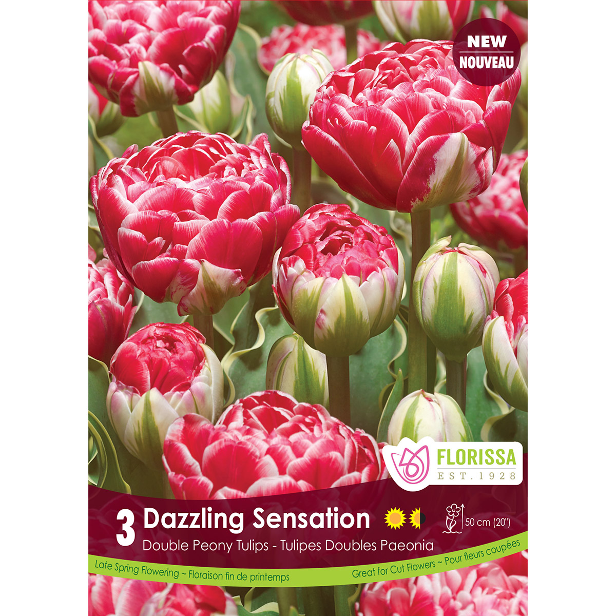 Tulipa 'Dazzling Sensation' Bulbs