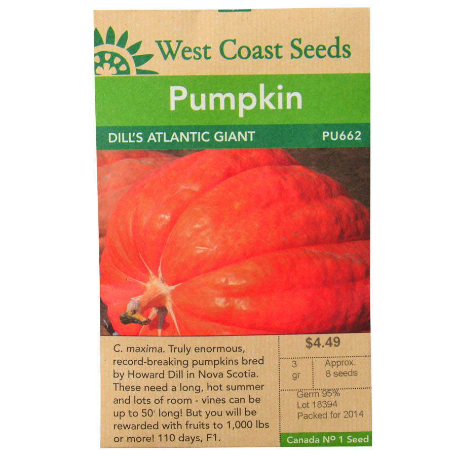 Pumpkin Dills Atlantic Giant Seeds PU662