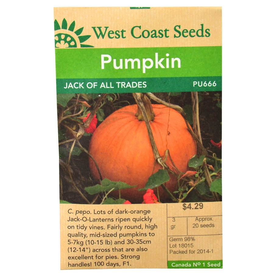 Pumpkin Jack of All Trades Seeds PPU666