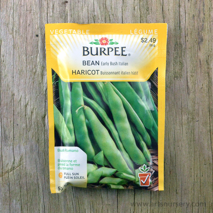 Early Bush Italian Bean Seeds Burpee