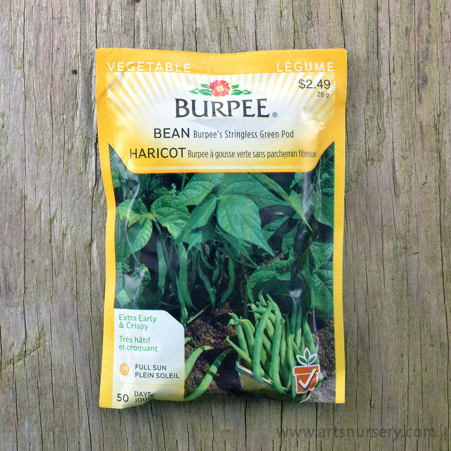 Burpees Stringless Green Pod Bean Seeds
