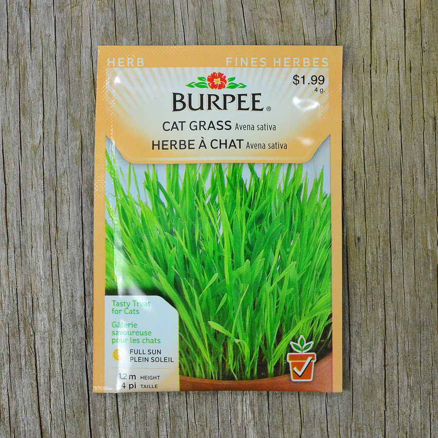 Cat Grass Seeds Burpee