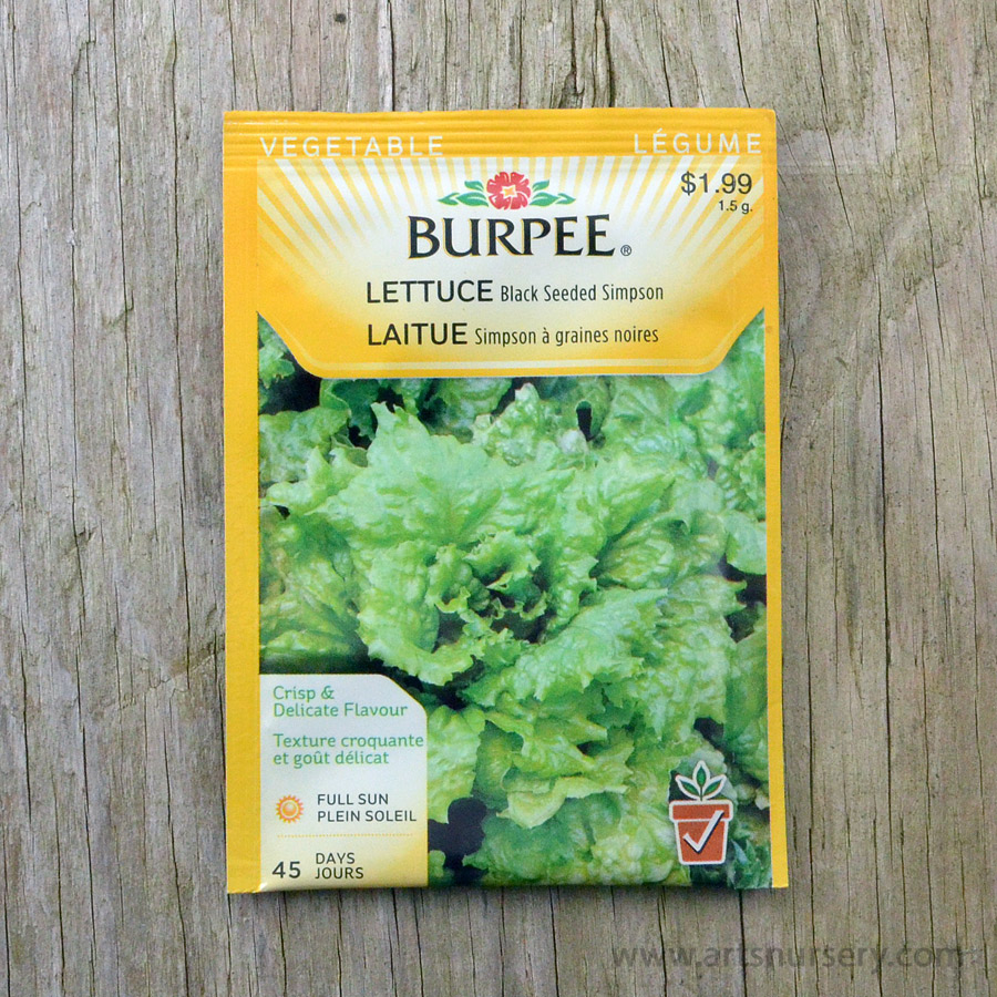 Black Seeded Simpson Seeds Burpee