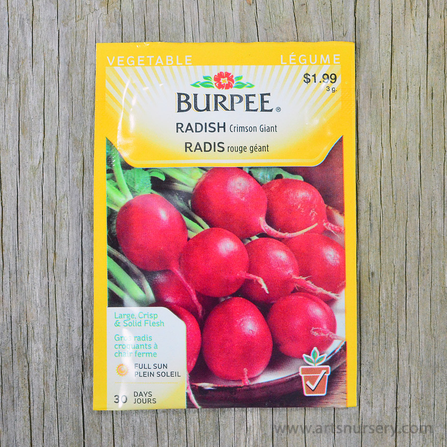 Crimson Giant Radish Seeds Burpee