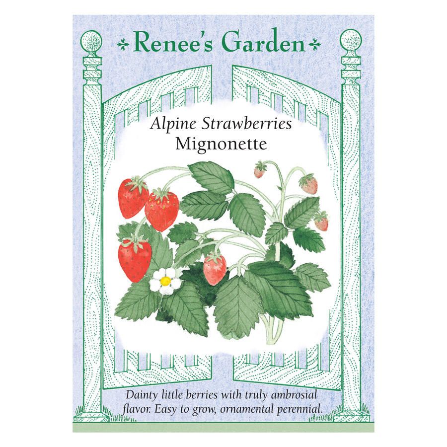 Mignonette Alpine Strawberry Seeds