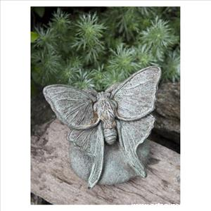 Campania - Lunar Moth on Rock