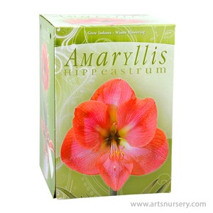Amaryllis_Kit_DarkPink.jpg