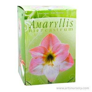 Amaryllis_Kit_LightPink.jpg