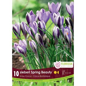 Bulb_Crocus_Spring_Beauty.jpg