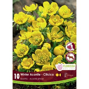 Bulb_Eranthis_Winter_Aconite.jpg