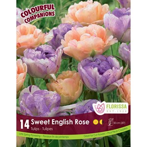 Bulb_Sweet_English_Rose.jpg