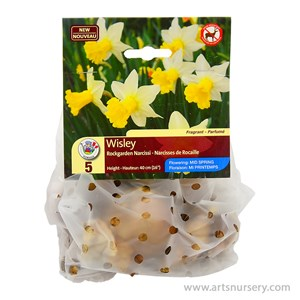 Narcissus_Wisley.jpg