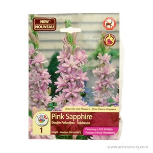 Polyanthes_PinkSapphire.jpg
