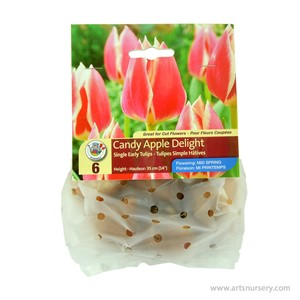 Tulip_CandyAppleDelight.jpg